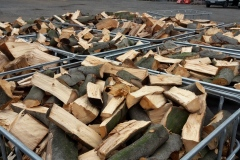 Buchenholz vor dem trocknen
